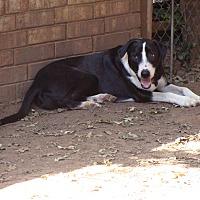 Adopt A Pet :: Spike - Blanchard, OK