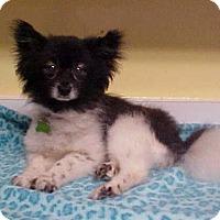 Adopt A Pet :: Glori - 10 lbs - Dahlgren, VA
