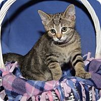 Adopt A Pet :: Peanut Butter (Spayed) - Marietta, OH