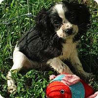 Adopt A Pet :: Benji PENDING - Flanders, NJ
