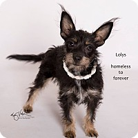 Adopt A Pet :: Lolys - Sherman Oaks, CA