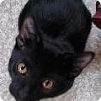 Adopt A Pet :: Ford - Fairfax, VA