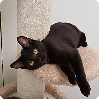 Adopt A Pet :: Ferdinand - Danville, IN