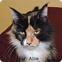 Adopt A Pet :: Alice - Slidell, LA