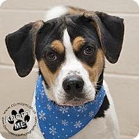 Adopt A Pet :: Joker-URGENT - Troy, OH