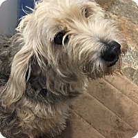 Adopt A Pet :: Oreo - Hillsboro, OH