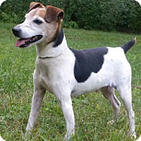 Adopt A Pet :: Chrome - Canterbury, CT