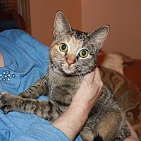 Adopt A Pet :: Kitty Boo Boo - Spring Valley, NY