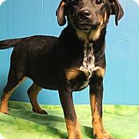 Adopt A Pet :: Tumble - Wytheville, VA