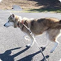 Adopt A Pet :: Mya - Augusta County, VA