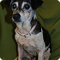Adopt A Pet :: Sparky in Houston - Houston, TX