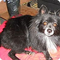 Adopt A Pet :: Heidi - dewey, AZ