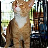 Adopt A Pet :: Honeydew - Merrifield, VA