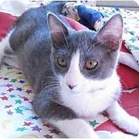 Adopt A Pet :: Aramis (aka Missy) - Davis, CA