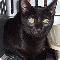 Adopt A Pet :: Artemis - Germansville, PA
