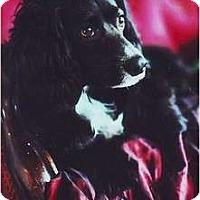 Adopt A Pet :: Patch - Tacoma, WA
