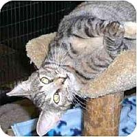 Adopt A Pet :: Prestwick - Lombard, IL