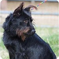 Adopt A Pet :: Jack - Providence, RI