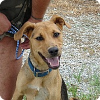 Adopt A Pet :: CLETUS - Scottsburg, IN