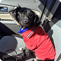 Adopt A Pet :: Odie - Holmes Beach, FL