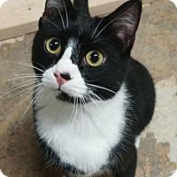 Adopt A Pet :: Gru - Fairbury, NE