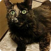 Adopt A Pet :: Mia - Colmar, PA