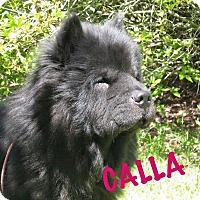 Adopt A Pet :: CALLA - Dix Hills, NY