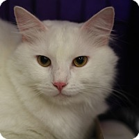 Adopt A Pet :: Ghost - Richmond, VA