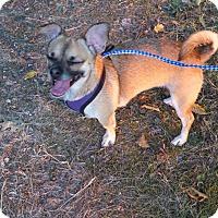Adopt A Pet :: Sammi - Bellingham, WA