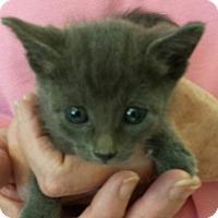 Adopt A Pet :: Jackpot - Scottsdale, AZ