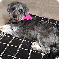 Adopt A Pet :: Jackie - Sharonville, OH