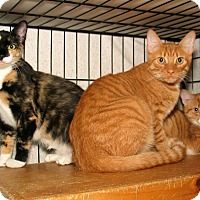 Adopt A Pet :: Rich and Ray and Roxana - Milford, MA