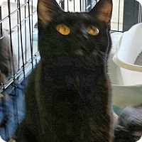 Adopt A Pet :: Gem - Fairborn, OH