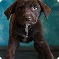 Adopt A Pet :: Hetta - Waldorf, MD
