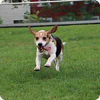 Adopt A Pet :: Hayden Rolence - Brooklyn, NY