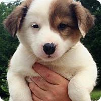 Adopt A Pet :: I'M ADOPTED Emmi's