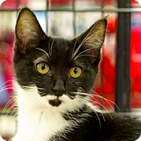 Adopt A Pet :: Kelsi - Great Falls, MT