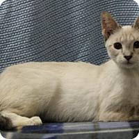 Adopt A Pet :: Yang - Seminole, FL