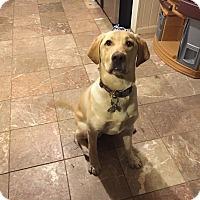 Adopt A Pet :: Hunter - Hartland, MI