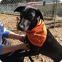 Adopt A Pet :: Molly - Voorhees, NJ