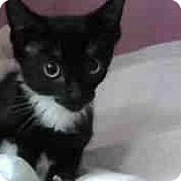 Adopt A Pet :: Mips - Eureka, CA