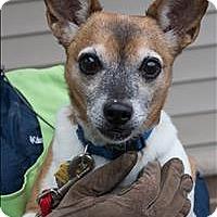 Adopt A Pet :: Harold - Duluth, MN