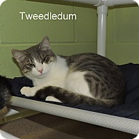 Adopt A Pet :: Tweedledum - Slidell, LA