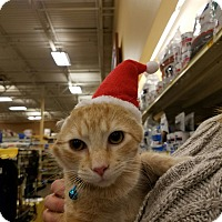 Adopt A Pet :: Jack2 - Jeannette, PA