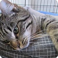 Adopt A Pet :: Martin - Jackson, MO