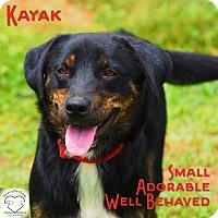 Adopt A Pet :: Kayak - Washburn, MO