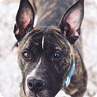 Adopt A Pet :: Twizzler - Cleveland, OH