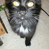 Adopt A Pet :: QUEENY - Ocala, FL