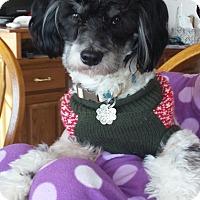Adopt A Pet :: Harley - Jacksonville, FL