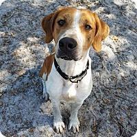 Adopt A Pet :: Teddy - Umatilla, FL
